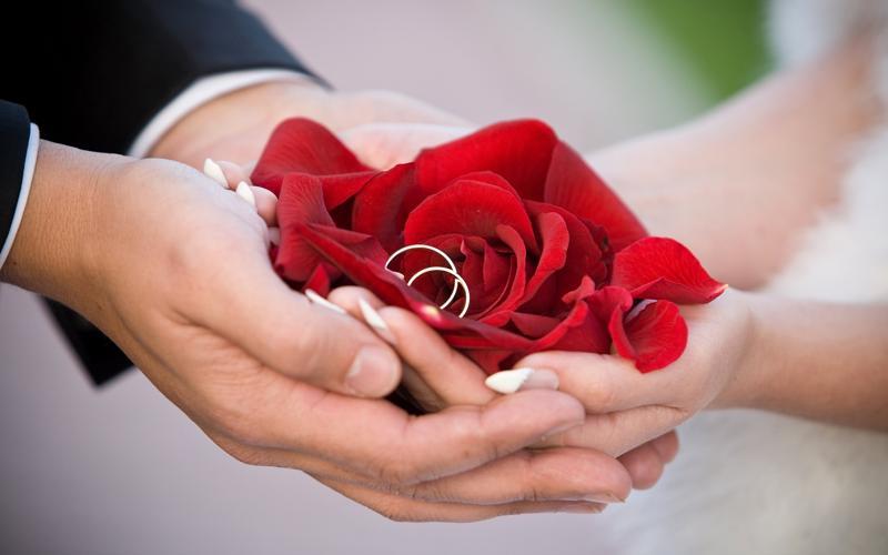 aniversario de bodas rosas